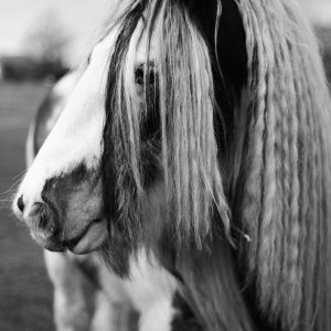 Cotswold Horse Greetings Card