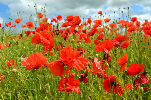 Poppy Field Cotswold Landscape Photography Greetings Card
