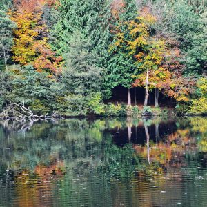 Woodchester Lakes Cotswold Greetings Card